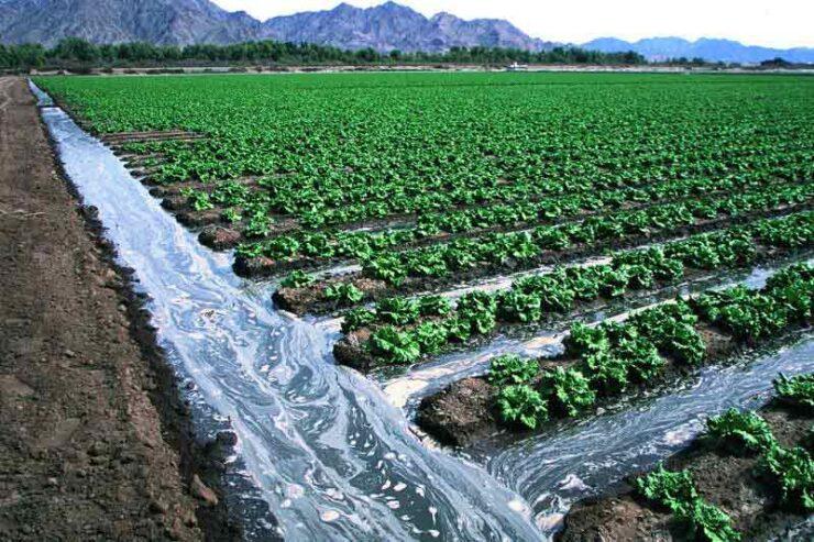 کشاورزی با آب شور آیا امکان دارد مشکلات آن و روش صحیح کشاورزی با آب دریا