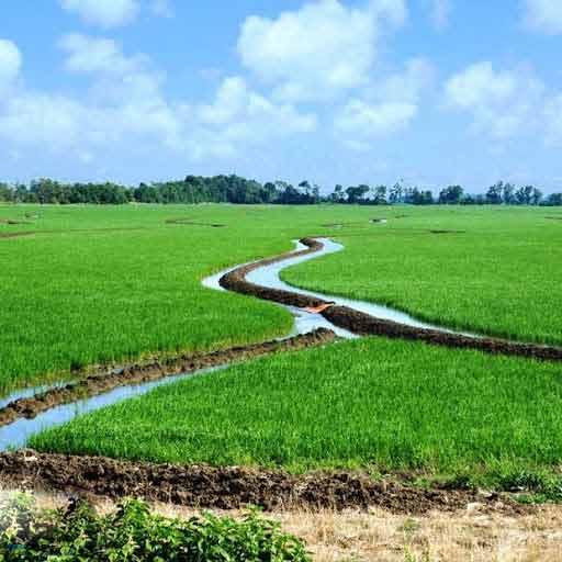اهمیت آب در کشاورزی و وجود منابع آب در رشد گیاهان و کشاورزی در مناطق کم آب و خشک و نیمه خشک